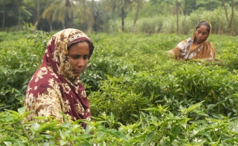 A new project puts women at the forefront of climate resilience in Bangladesh